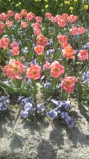 flower051010