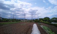 field1051410