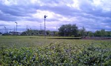field2051410