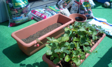 gardening060210