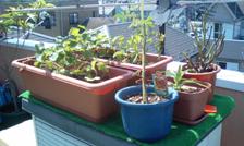 Garden2060210