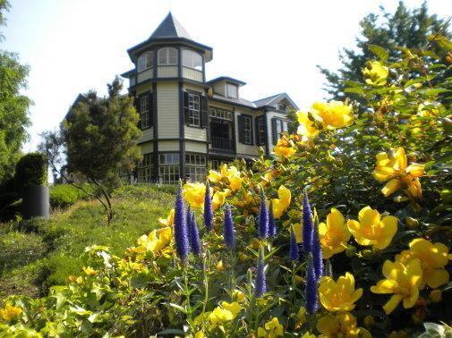 外交官の家とキンシバイの花写真