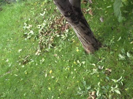 葉が落ちてきた!