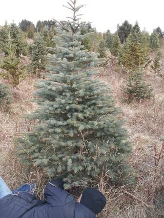 木を切って〜