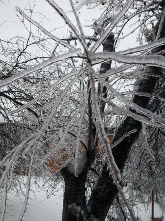 凍っている木