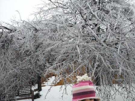 凍っている木ー2