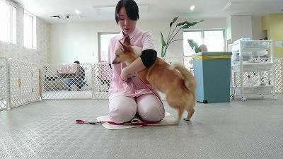 VIDEO_20190411_153909_000032.jpg