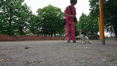 VIDEO_20190713_112720_000029.jpg