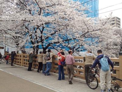 桜咲く板橋