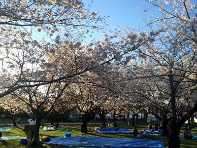 静岡・駿府城公園