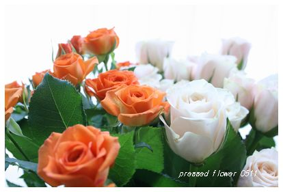 pressed flower 0511