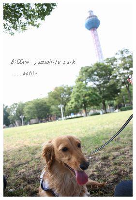 山下公園〜
