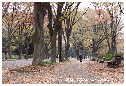 公園も紅葉〜。