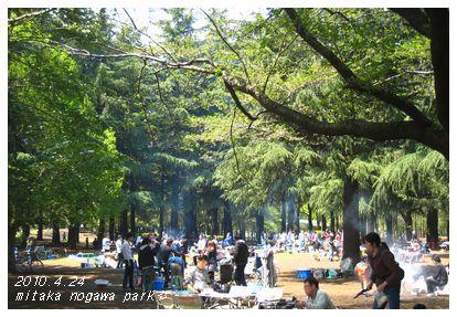 今年は野川公園。