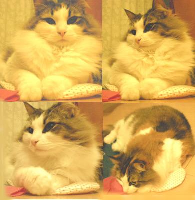 猫 キッカー クッション