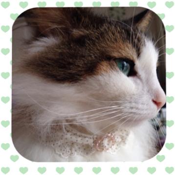 猫の首輪 【そよ風】