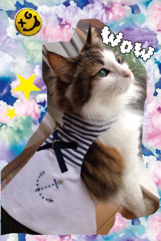 猫 ハーネス シーブリーズ
