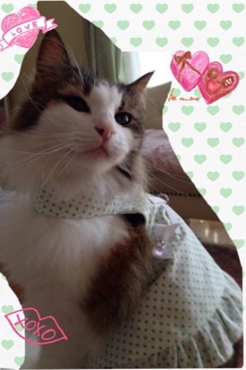 猫 ハーネス 【ライムソーダ】