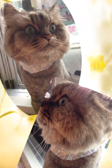 猫の首輪 ロマンティックローズ