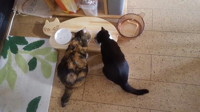 【3連タイプ】木製ネコ型 フードテーブル(フードボウル12.5cm付)13.CATS.WORKSオリジナル