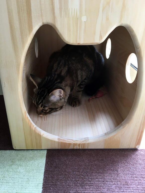 13.CATS.WORKSオリジナル猫ハウス