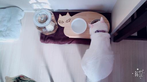 13.CATS.WORKSオリジナルネコ型フードテーブル