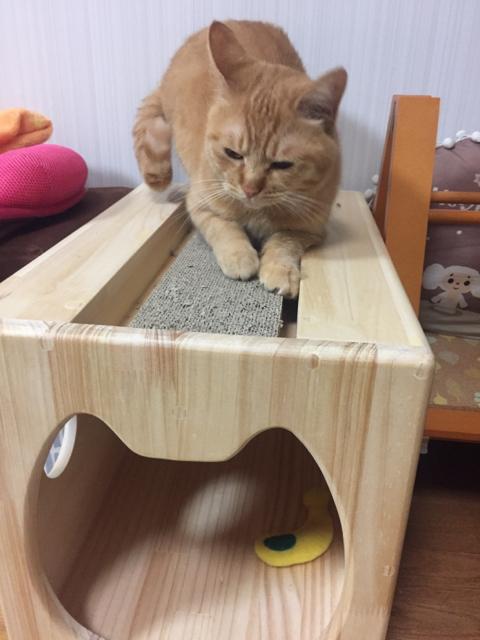 木製猫ハウス・13.CATS.WORKSオリジナル