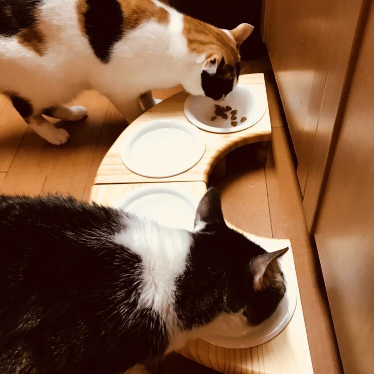 13.CATS.WORKSオリジナル・フードテーブルバウム4ぶんの1