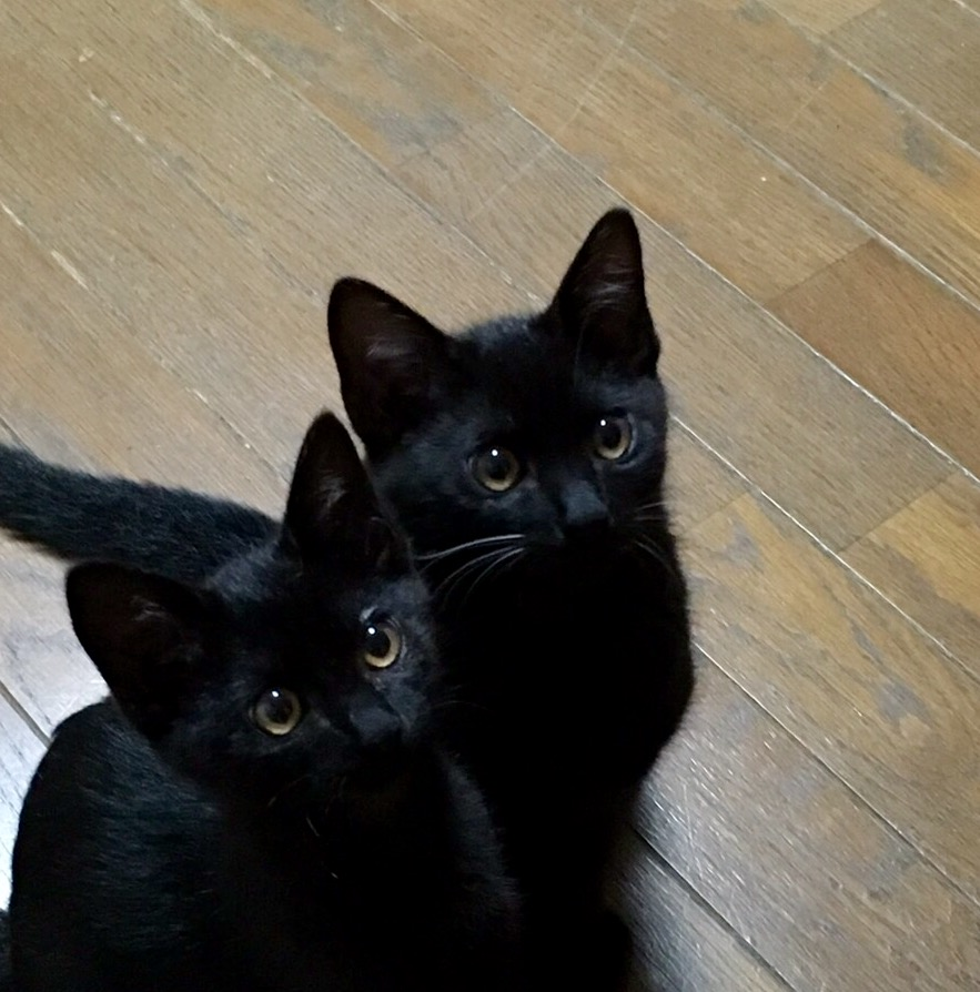 2匹の黒猫