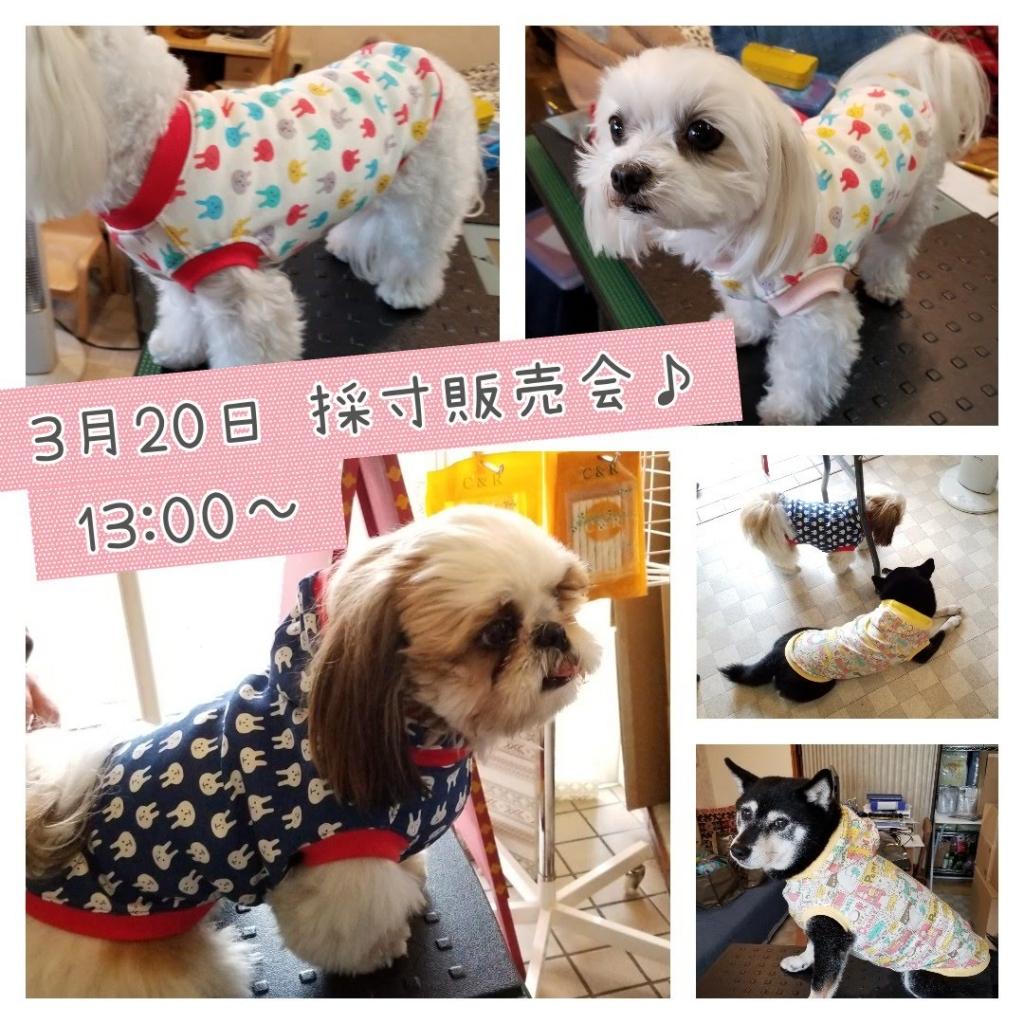 ショアーズ 採寸販売会 綿 犬の洋服