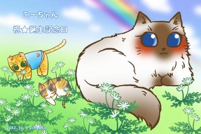 虹の国のこーちゃん