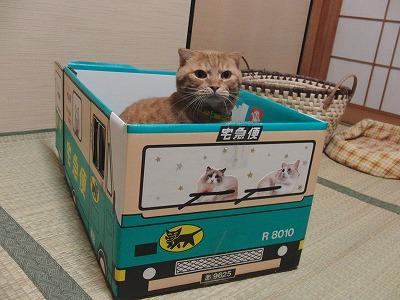 吾郎あおむく号乗車