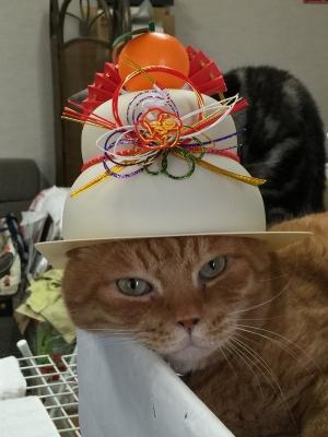 お鏡帽子 吾郎