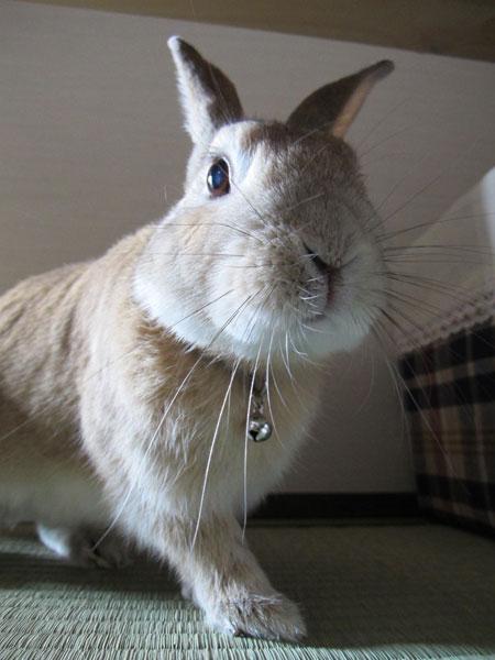 ルーク 2011年4月15日の写真
