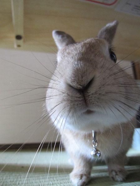 ルーク 2011年4月15日の写真�
