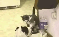 猫 VS 犬 Food fight