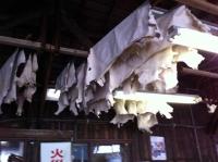 工場見学/乾燥
