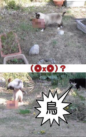野鳥を咥える猫