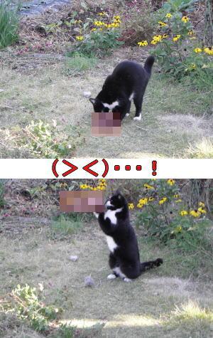 黒白猫と野鳥