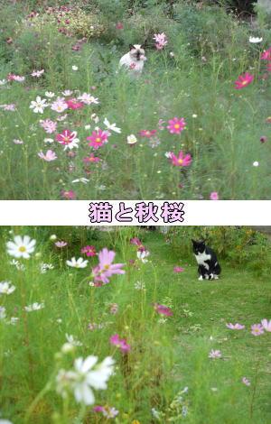 オスシャム&黒白猫