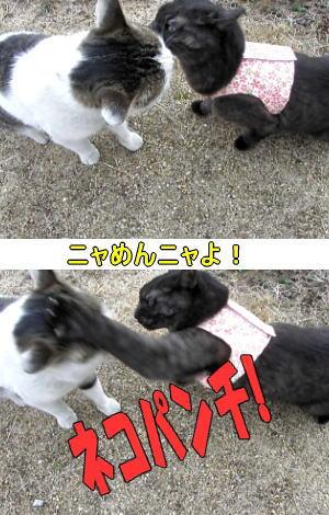 迷い猫VSアズ