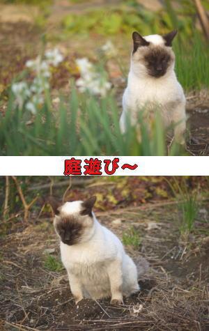 猫のオシッコ