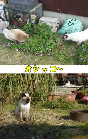 オシッコ猫