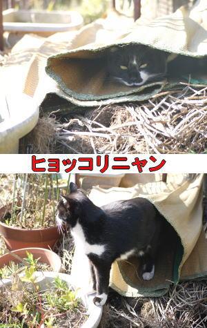 ゴザ猫ちゃん♀