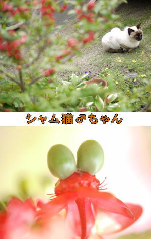 ミッキーマウスの木