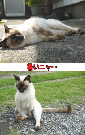 ぐったり猫