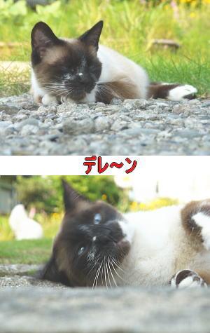 バタンキュー猫