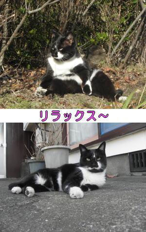 黒白猫♀ちゃん