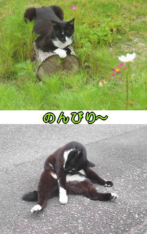 黒白猫ちゃん♀
