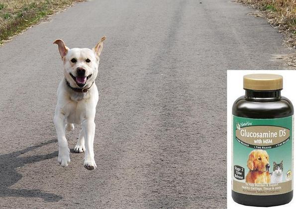 犬用グルコサミン
